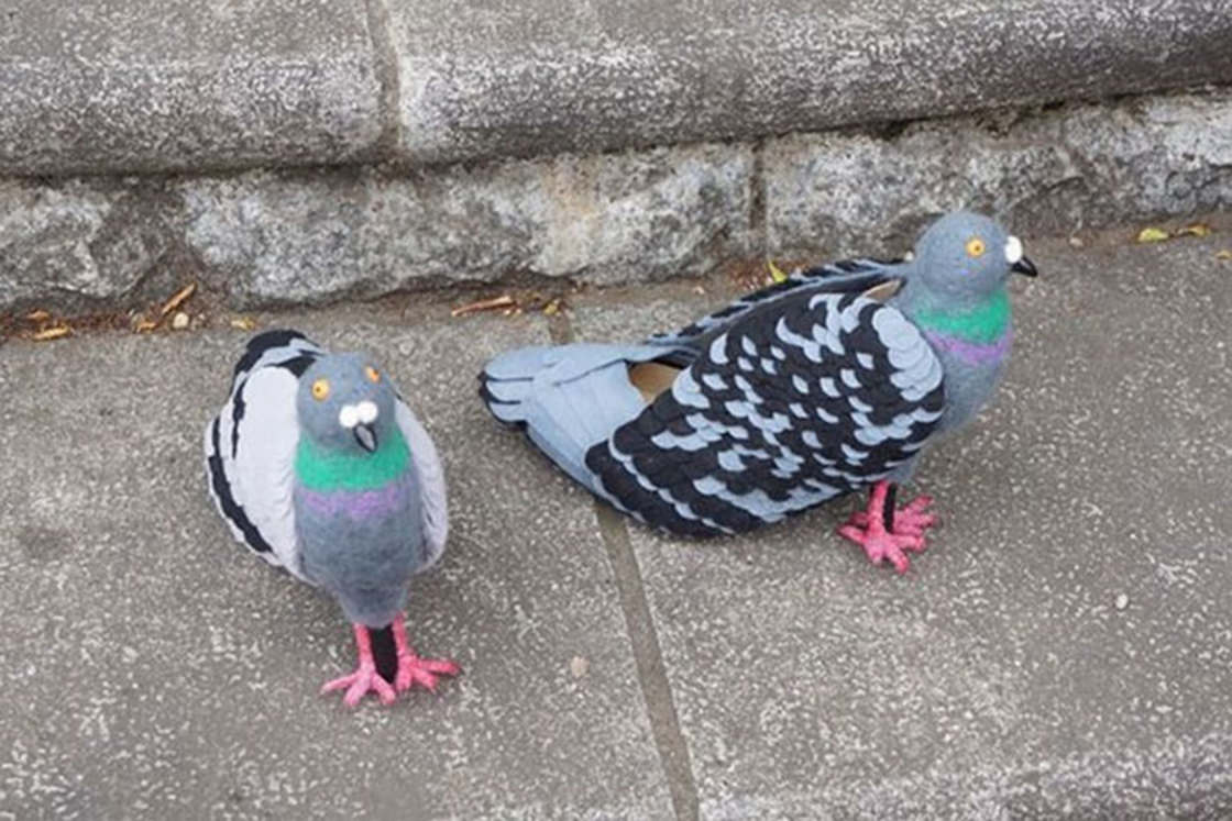 Les solutions anti pigeon