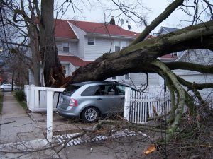 Assurance habitation arbre qui tombe